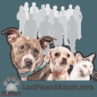 Lost ~ Found ~ Adopt