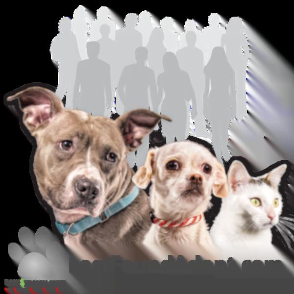 Lost~Found~Adopt
